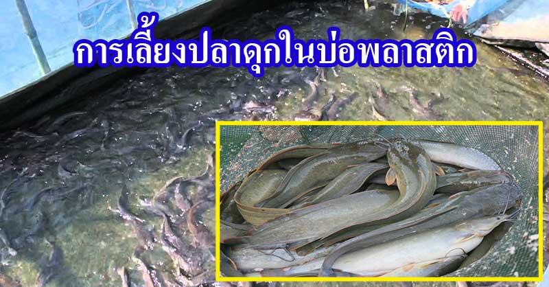 ผลการค้นหารูปภาพสำหรับ การเลี้ยงปลาดุกในบ่อพลาสติก