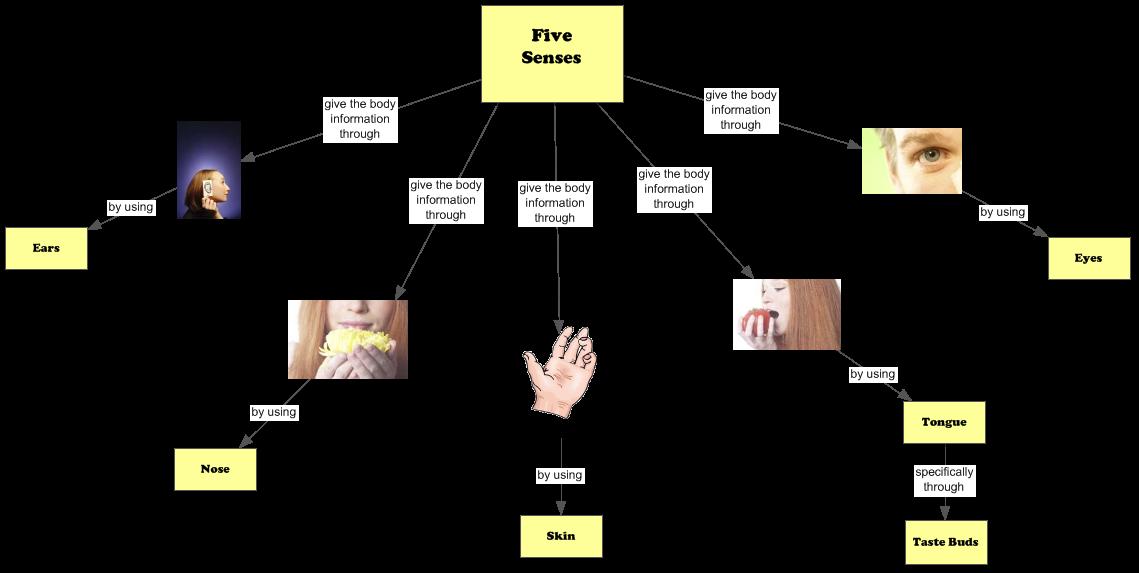 5 Senses: 5 Senses Concept Map