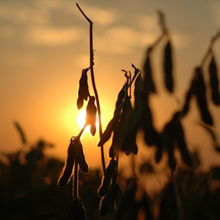 China's Soybean Import Growth To Slow In 2016/17 2
