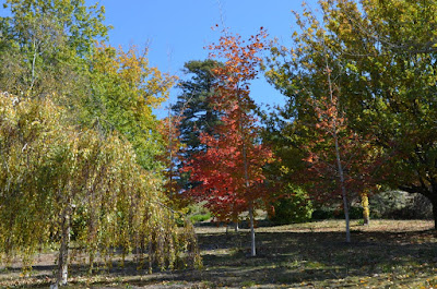 More widely spaced trees are showing off their autumn colours in browns, greens, reds and yellows.