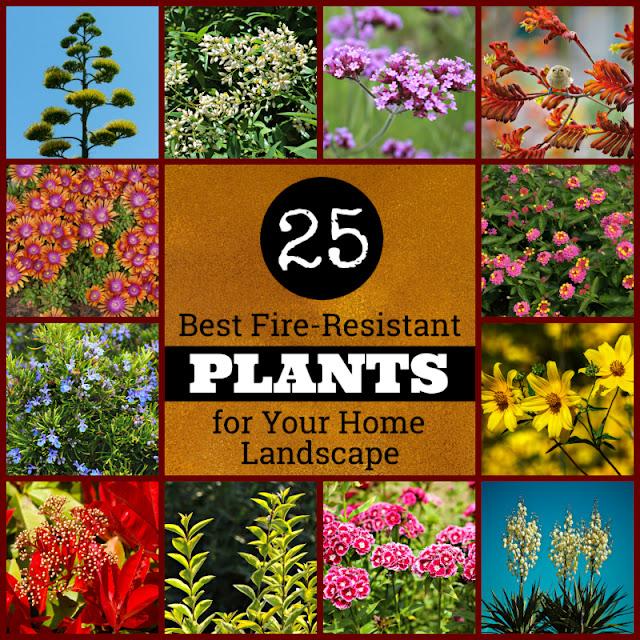 Fire Resistant Plants List Home Landscape