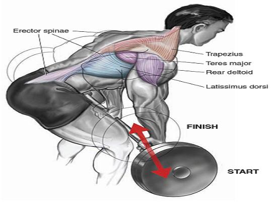 Workout & Deadlift for a Bigger Back