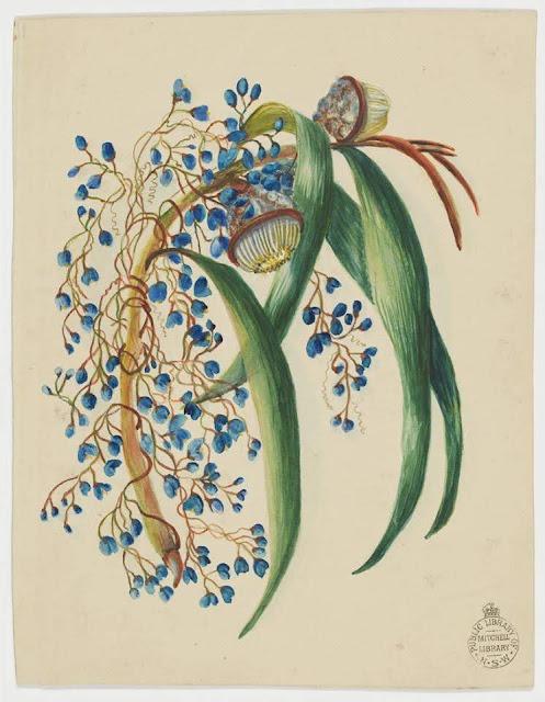 Christmas Card design depicting Australian native blue flowers and flora.