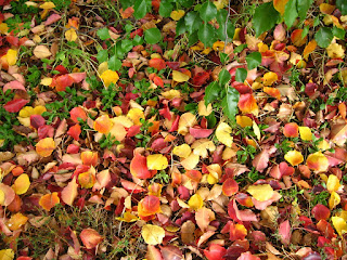 fallen autumn leaves of reddish brown and yellow fallen onto green foliage.