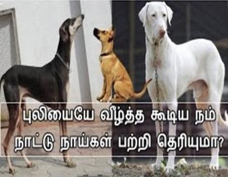 Namma Dog i Patri Ungalukku Theriyaatha Vidayam