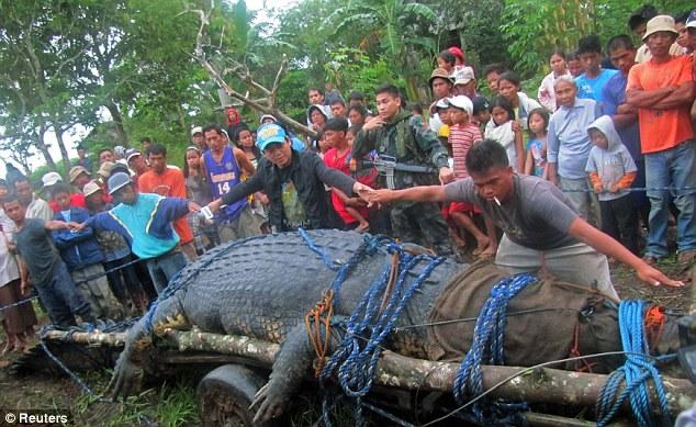 Ever Biggest Found Shark Anaconda