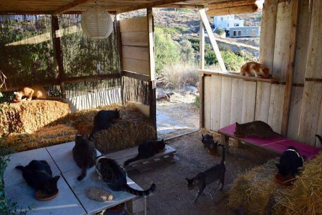 Pagan por cuidar gatos en una isla paradisíaca que esperas ?
