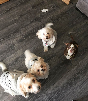 day care and boarding services for new dog owners in Miami and Doral, Florida.