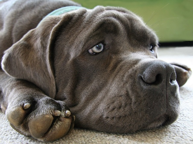 Florida officials confirm 7 cases of canine influenza