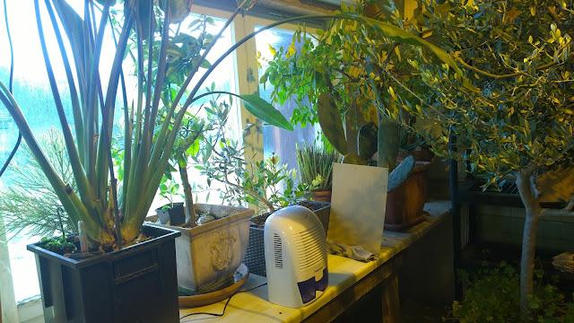 Winterquartier für Kübelpflanzen mit Luftentfeuchter (c) by Joachim Wenk