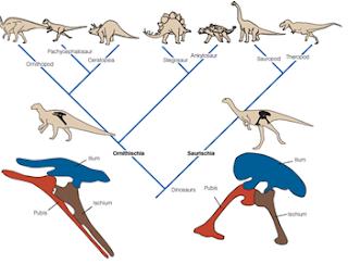 Benarkah Ukuran Terbesar Dinosaurus Berkembang saat Jaman Jura?