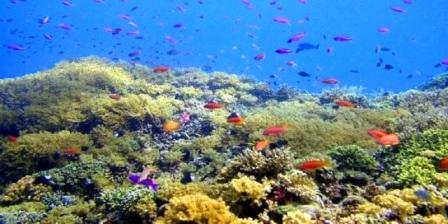 taman laut bunaken terdapat di laut taman laut bunaken di taman laut bunaken terletak taman laut bunaken manado
