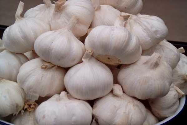 Info kesehatan - khasiat dan kandungan bawang putih