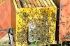Επαναστατική πατέντα ποτίσματος μελισσιών: Απλή κατασκευή, απαλλαχτείτε από τις ασθένειες