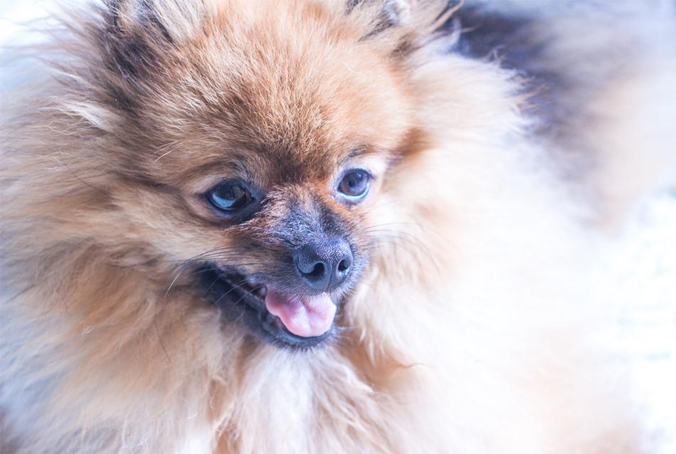 sushi cachorro de estimação apartamento pequeno blog do math