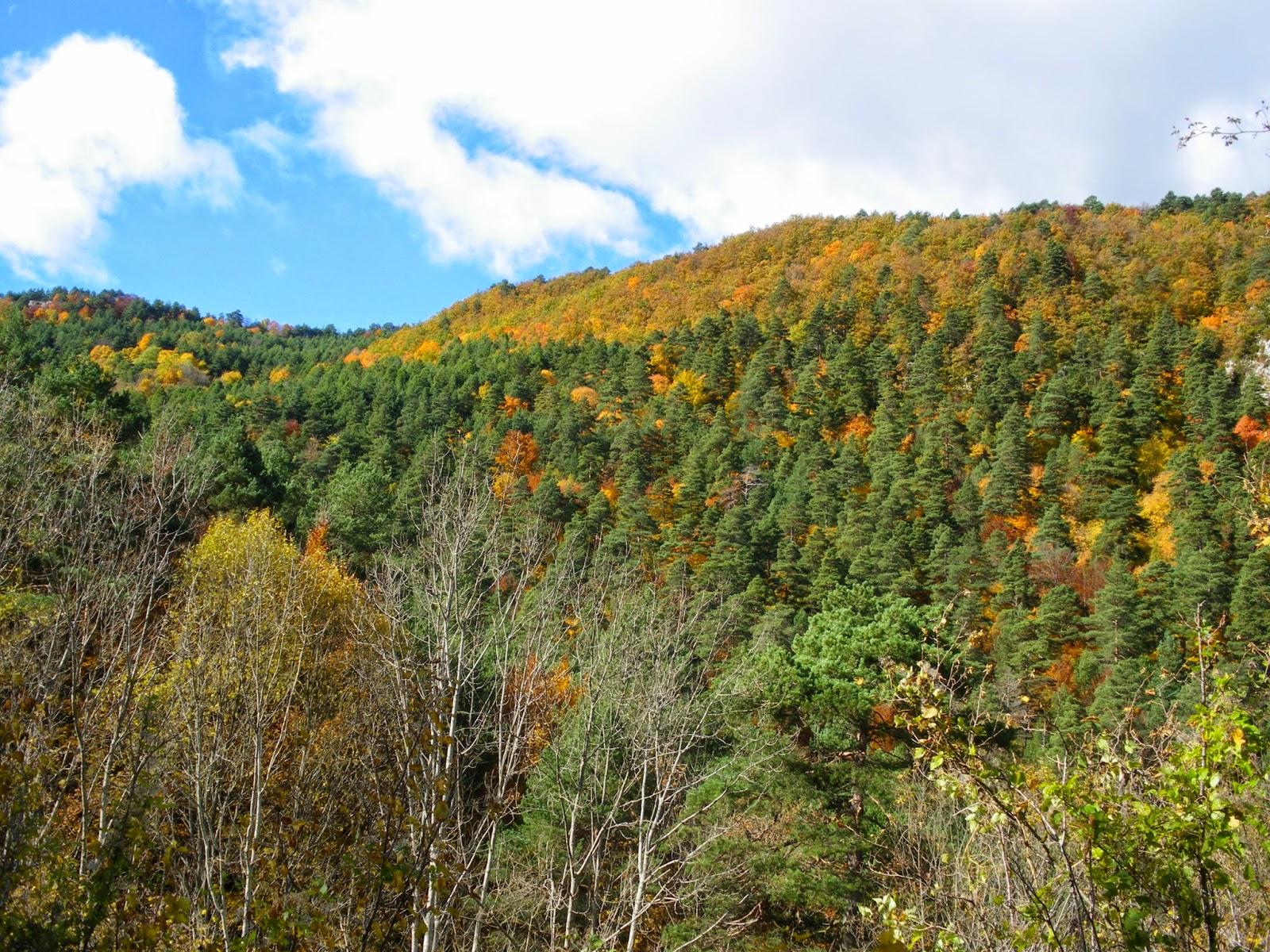 Serra de Catllaras a la tardor Fageda Santuari de Falgars Alt Bergueda La Pobla de Lillet
