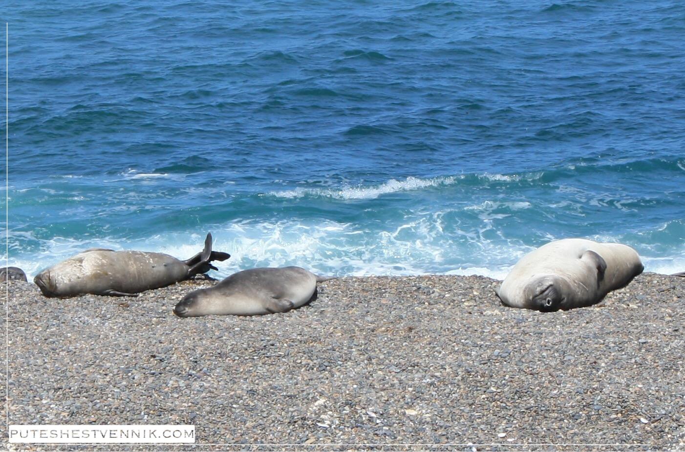 Морские животные на берегу Атлантического океана