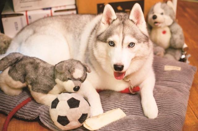Bertemu Anjing-anjing Menggemaskan di Jepang