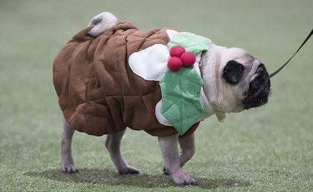 10 điều bạn làm khiến cún cưng ghét cay ghét đắng