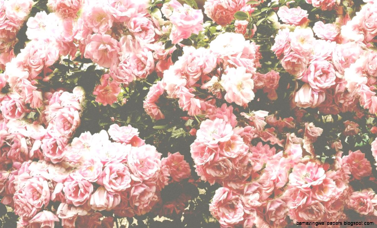 Pink Flower Background Tumblr Amazing Wallpapers