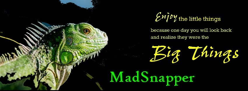 MadSnapper