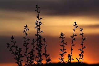 piantine sole tramonto foto
