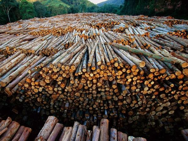 nonsustainable timber harvesting