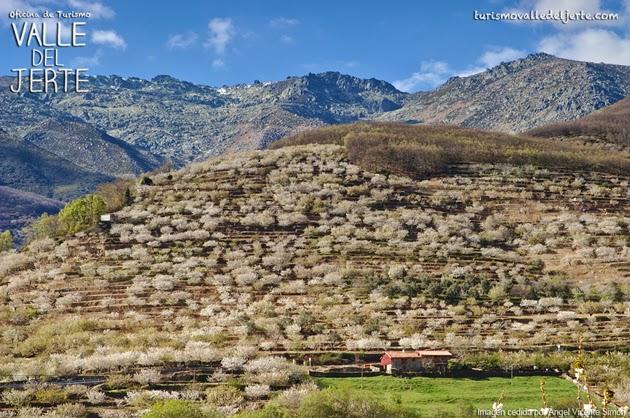Primavera y Cerezo en Flor 2018. Valle del Jerte