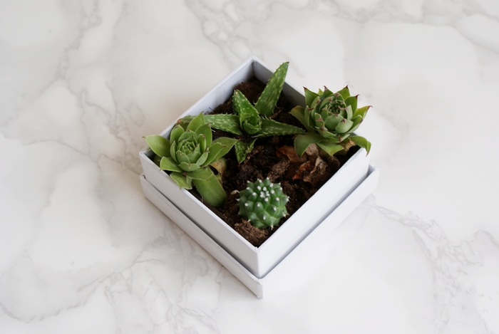 diy succulents box boxed gift