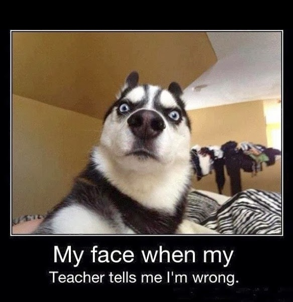 My face when my Teacher tells me I'm wrong. #funny #meme #husky #relatable #teacher #puppy