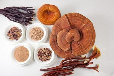 Nấm linh chi được xếp vào nhóm thuốc giúp cải lão hoàn đồng
