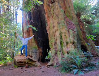 Wayne Dunlap Huge Redwood Tree Redwood National and State Park California