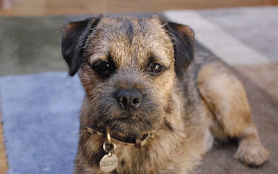 Perro Bordier Terrier