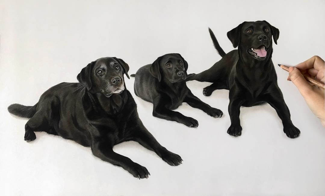 05-Elly-Bear-and-Chase-Black-Labrador-Danielle-Fisher-Dog-Portraits-with-Pastel-Drawings-www-designstack-co