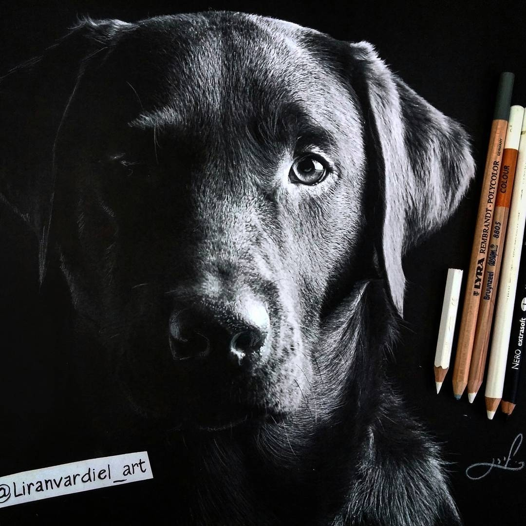 03-Liran-Vardiel-Animal-Drawings-using-Colored-Pencils-www-designstack-co
