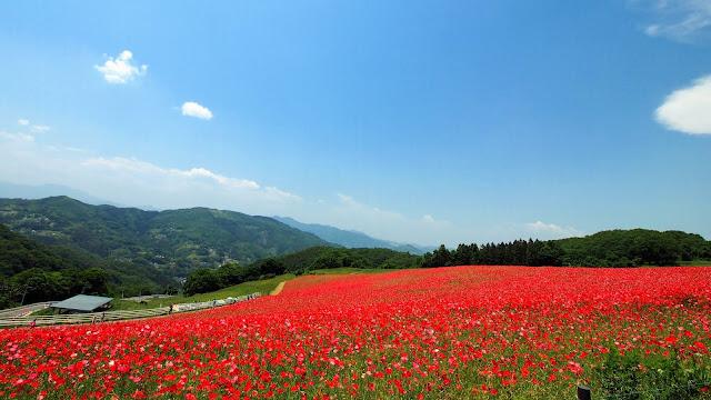 横瀬駅から秩父高原牧場を経由してファームラインで定峰峠へ。定峰峠から奥武蔵グリーンラインを通って高麗川駅まで走るサイクリングコース