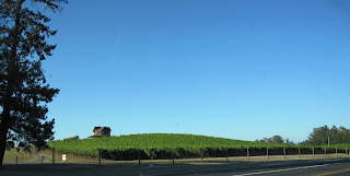 Rolling hill of green grape vines in Sonoma County, blue sky, farm house.