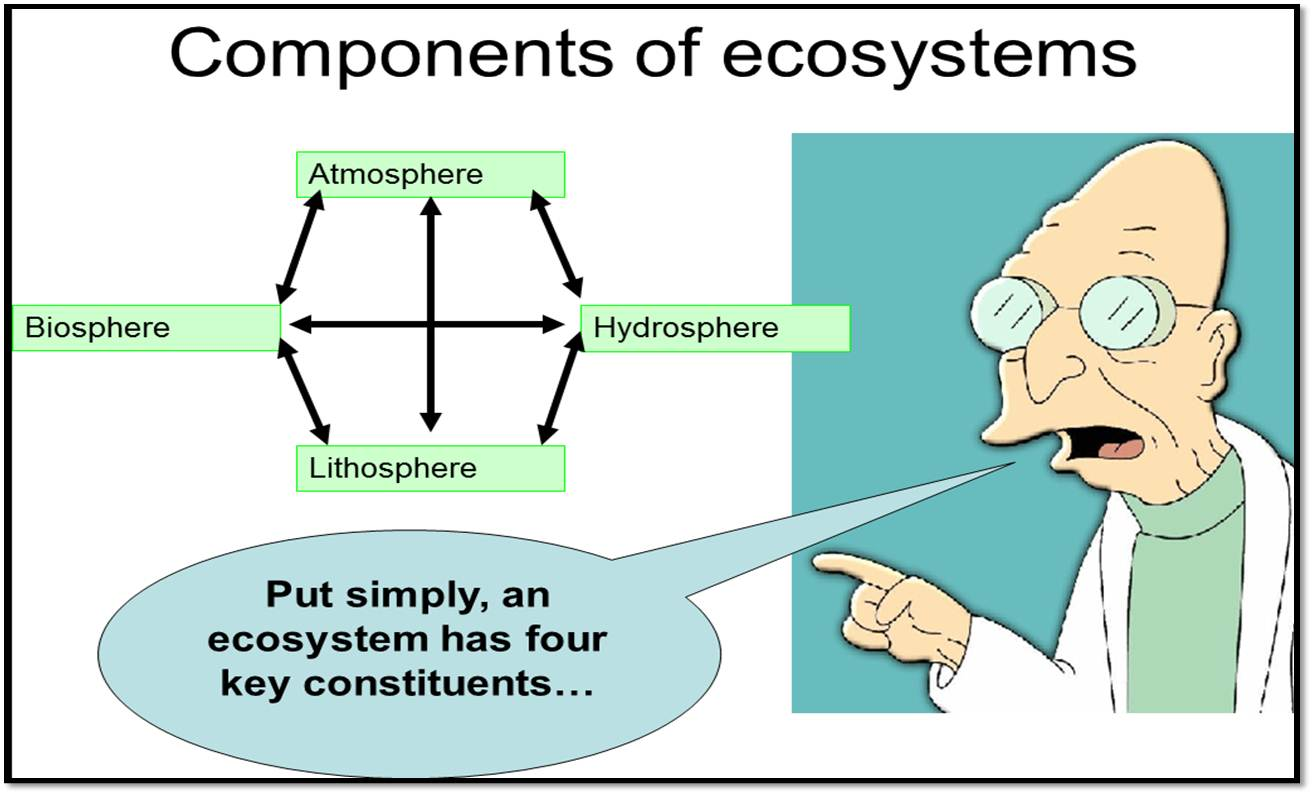 what are the major components of an ecosystem