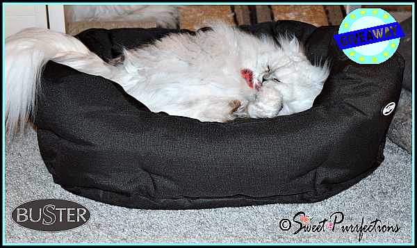 Truffle playing inside BUSTER cocoon pet bed