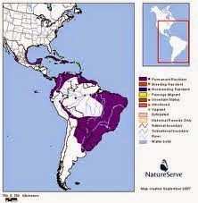 masked duck Nomonyx dominicus map