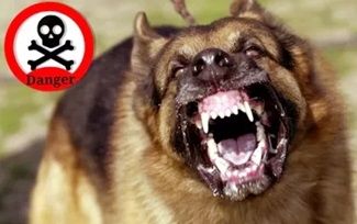 10 Most dangerous DOG BREEDS living around the world…