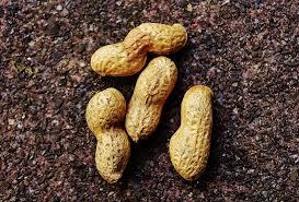 5 Manfaat kacang Tanah Untuk Kesehatan Tubuh Yang Harus Kalian Ketahui