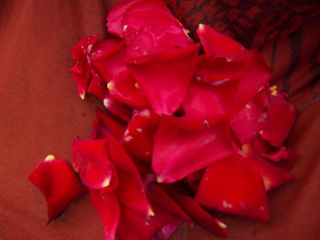 Rosas del Huerto de Beires