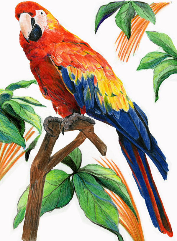 Colored pencil birds