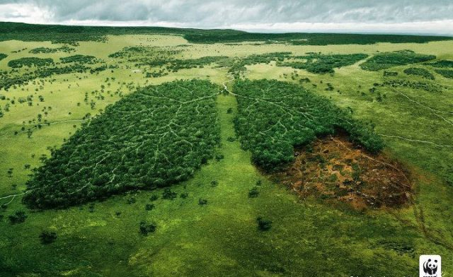 Menanamkan Rasa Cinta kepada Alam dan Lingkungan