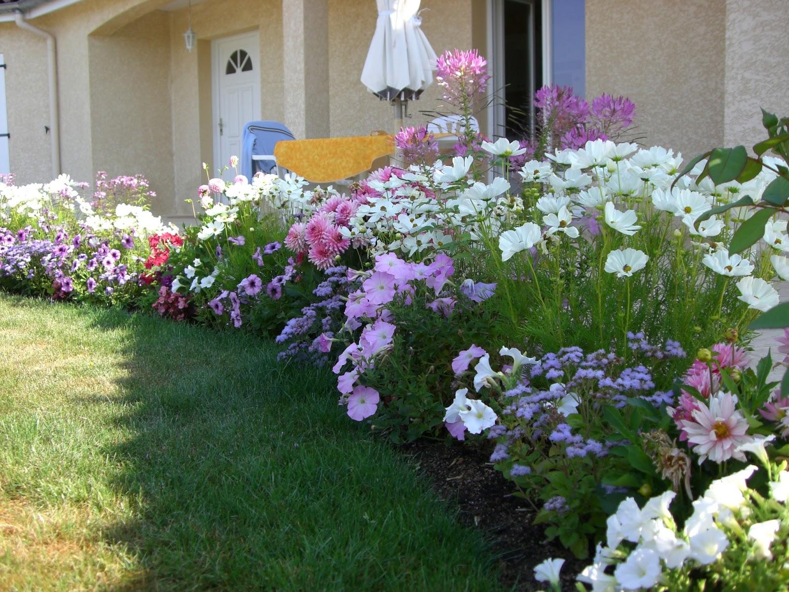 Roses du jardin Chêneland: L'été 2009