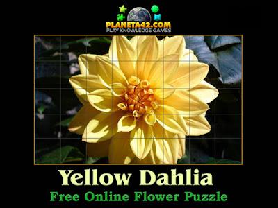 Yellow Dahlia Puzzle