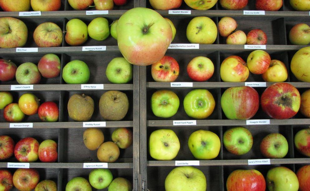 Berühmt NGOME AGRIBUSINESS: Apple Farming & Cultivation Techniques @SS_65