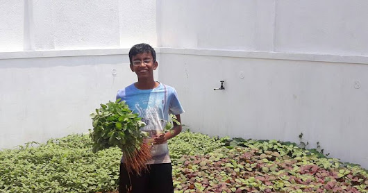 A 13 year old Backyard Farmer - Know more