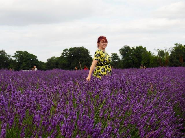 cánh đồng hoa oải hương đẹp nhất thế giới 5